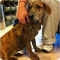Adopt A Pet :: Soul - Alexandria, VA