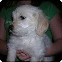 Adopt A Pet :: Lilly - Glastonbury, CT