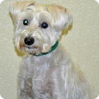 Adopt A Pet :: Aiden - Port Washington, NY