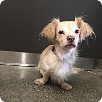 Adopt A Pet :: Luke- I am adorable! - Redondo Beach, CA