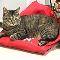Adopt A Pet :: Annie - Trevose, PA