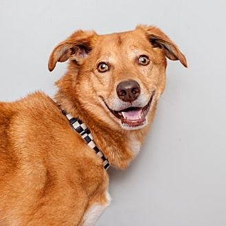 Mixed Breed (Large) Mix Dog for adoption in Mission Hills, California - Champion