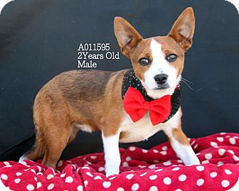Terrier (Unknown Type, Small) Mix Dog for adoption in Ashville, Ohio - Foxtrot