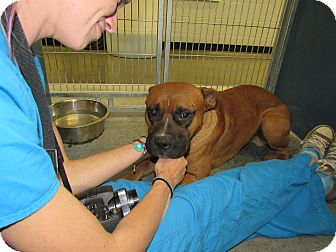 Adopt A Pet :: Andrew  - Henderson, NC