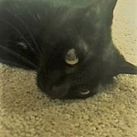 Adopt A Pet :: Lois - Columbia, SC