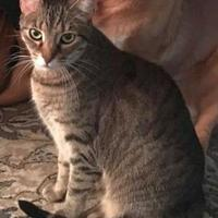Adopt A Pet :: Leilani - Elk Grove Village, IL