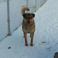 Adopt A Pet :: Baron - Meadow Lake, SK
