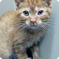 Adopt A Pet :: Jack - Channahon, IL
