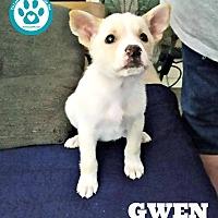 Adopt A Pet :: Gwen - Kimberton, PA