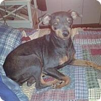 Adopt A Pet :: Sissy - Chandler, AZ