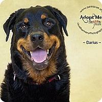 Adopt A Pet :: Darius - Phoenix, AZ