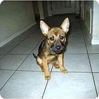 Adopt A Pet :: Hope - Irvine, CA