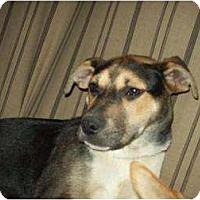 Adopt A Pet :: Gabby - Alliance, NE