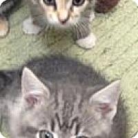 Adopt A Pet :: Holden (in front) - Aiken, SC