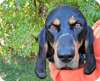 Coonhound Mix Dog for adoption in Mt. Pleasant, Michigan - Jessie