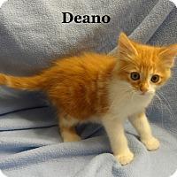 Adopt A Pet :: Deano - Bentonville, AR
