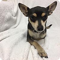 Adopt A Pet :: Bastian - Mission Viejo, CA
