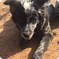 Adopt A Pet :: Crissy pending adoption - East Hartford, CT