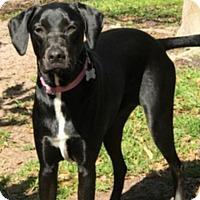 Adopt A Pet :: Beauty - Oviedo, FL