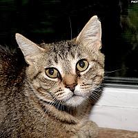 Adopt A Pet :: Tommi - Medina, OH