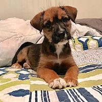 Adopt A Pet :: Lizzie - Hagerstown, MD