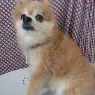 Adopt A Pet :: TJ