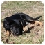 Photo 4 - Australian Shepherd Mix Puppy for adoption in Allentown, Pennsylvania - Usher
