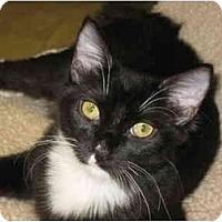 Adopt A Pet :: Jade Jagger - Deerfield Beach, FL