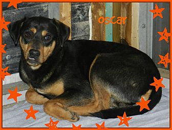 Manchester Terrier Mix Dog for adoption in Lawrenceburg, Tennessee - Oscar
