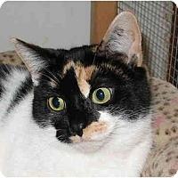 Adopt A Pet :: Becca - Cincinnati, OH