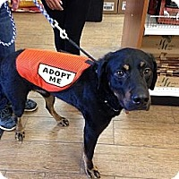 Adopt A Pet :: Aspen - Edgewater, NJ