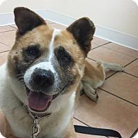 Adopt A Pet :: Ronin - Virginia Beach, VA