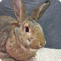 Adopt A Pet :: Clyde - Newport, DE