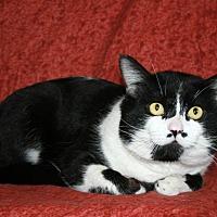 Adopt A Pet :: Jasper - Phelan, CA