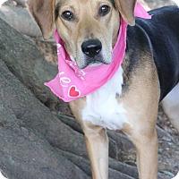 Adopt A Pet :: Scout - Dalton, GA