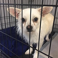 Adopt A Pet :: Roberta - Warner Robins, GA