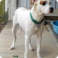 Adopt A Pet :: Cody - Oskaloosa, IA