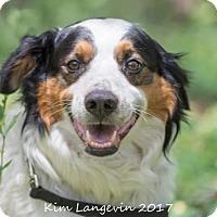 Adopt A Pet :: Boudreaux - Bradenton, FL