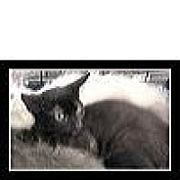 Adopt A Pet :: Professor Plum - San Bernardino, CA
