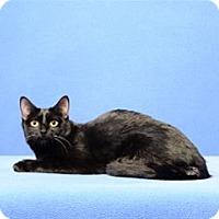 Adopt A Pet :: Laura Ingalls - Cary, NC
