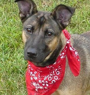 German Shepherd Dog Mix Dog for adoption in Mineral, Virginia - Roxy