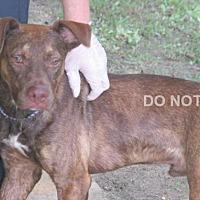Adopt A Pet :: Fraser - Rocky Mount, NC