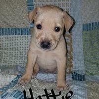 Adopt A Pet :: Hattie - Albany, NC
