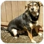 Photo 1 - Rottweiler/German Shepherd Dog Mix Dog for adoption in Portland, Oregon - Maximus