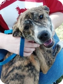 Hound (Unknown Type) Mix Dog for adoption in Vidor, Texas - Moses