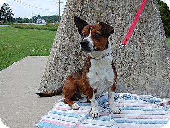 Corgi Mix Dog for adoption in North Judson, Indiana - Dougie