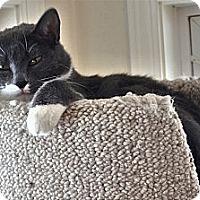 Adopt A Pet :: Elvis - Victor, NY