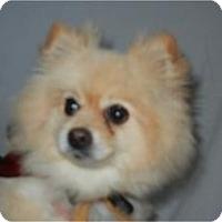Adopt A Pet :: Brianna (Annie) ADOPTED!! - Antioch, IL