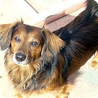 Adopt A Pet :: Wolfgang - San Jose, CA