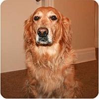 Adopt A Pet :: Megan - Rigaud, QC